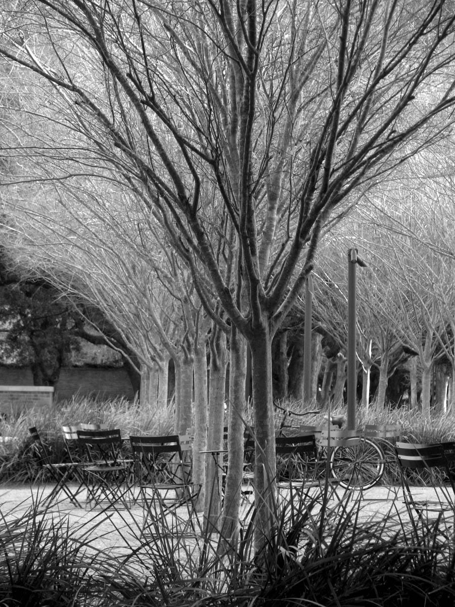 Rice University photo by Amanda Crawley