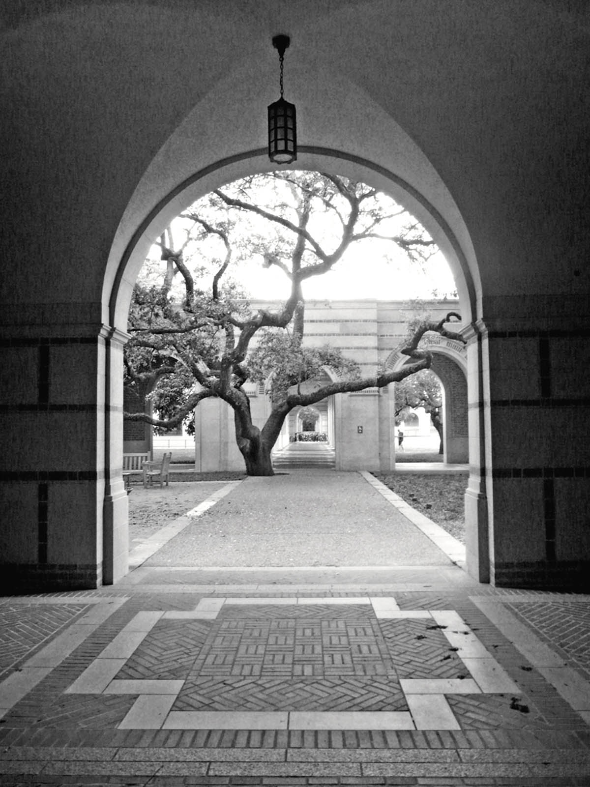 Rice University photo by Carol Ciarniello