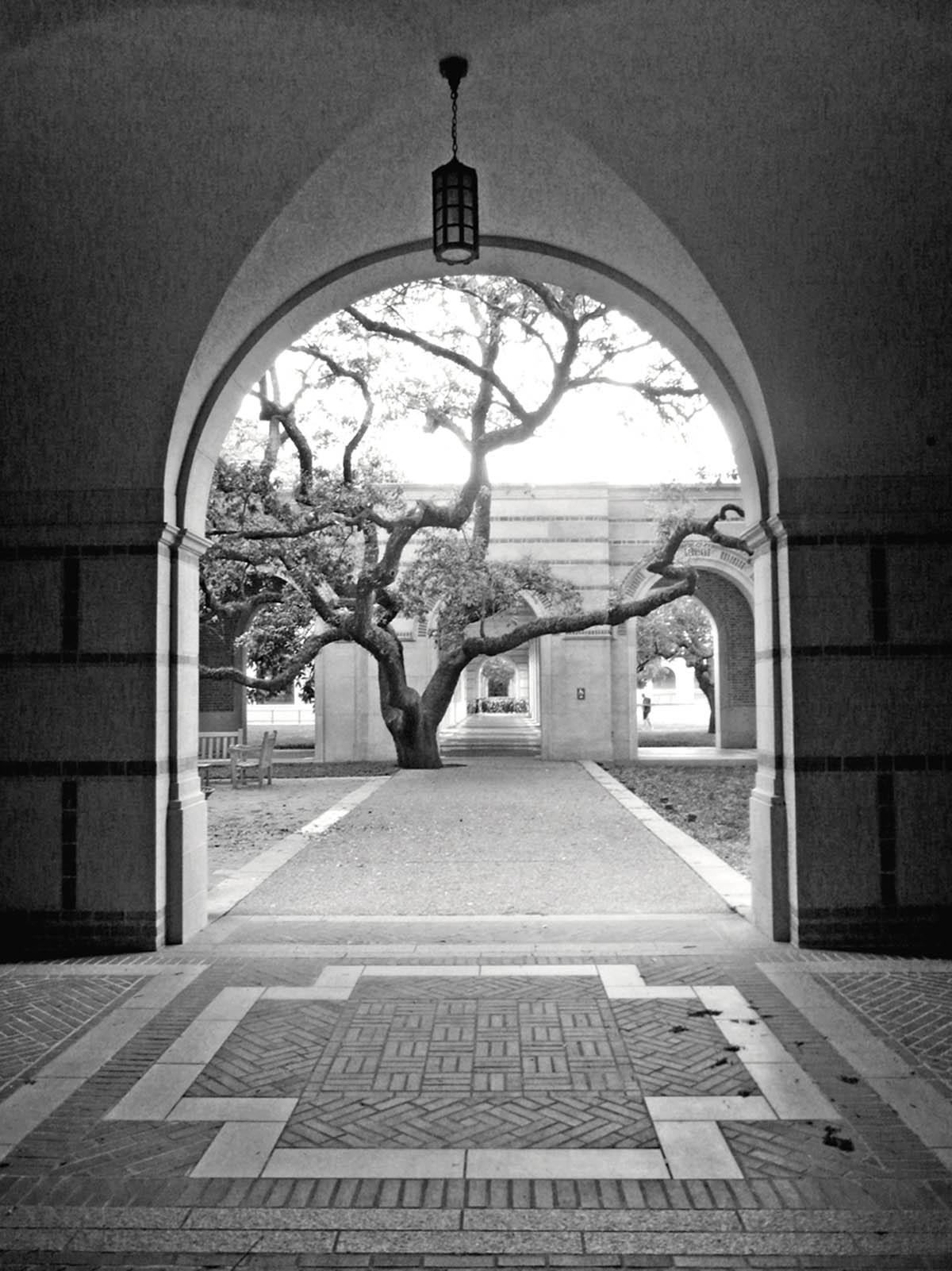 Rice University photo by Carol Ciarniello