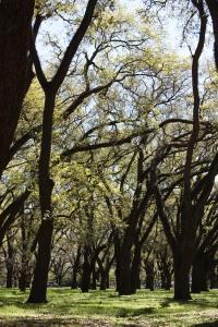 """Yellow Trees, Please"" by Courteney Harris"