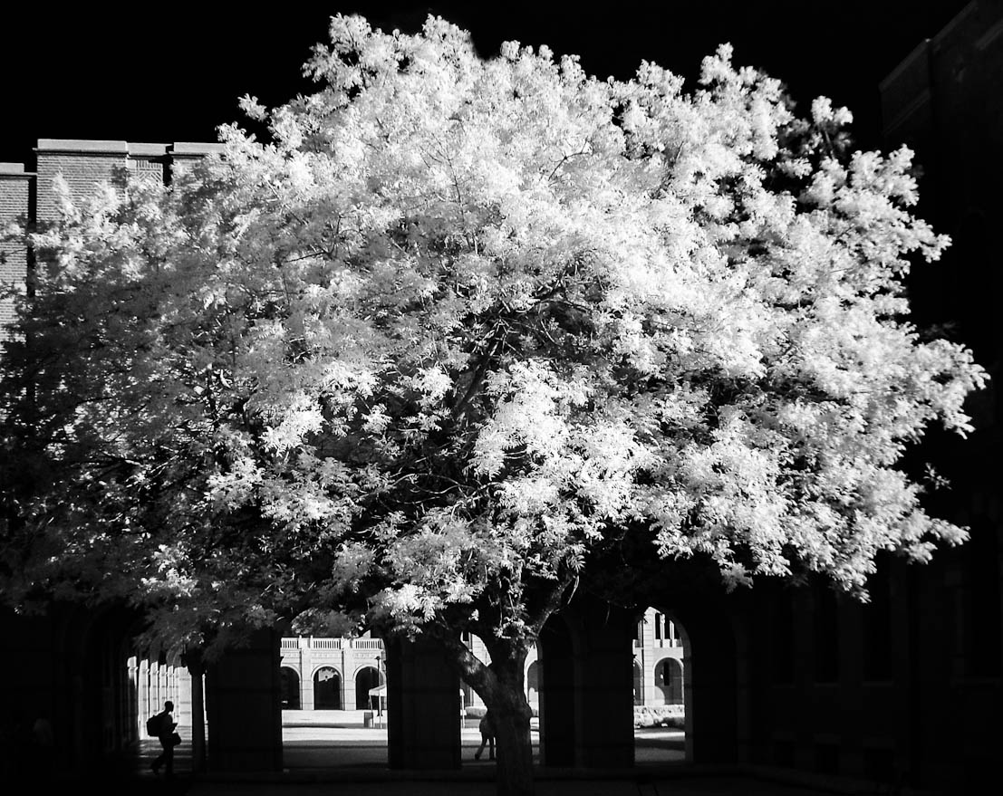 Rice University infrared photo by Kenneth Rice