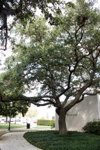 Warhol Tree